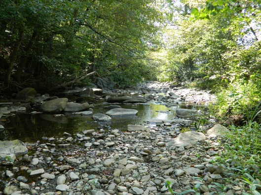 Creek bed in late August