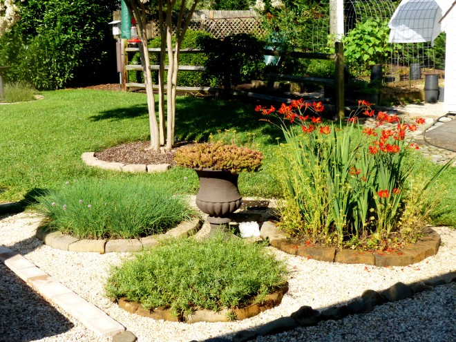 the herb bed in June 2015. A real success story.
