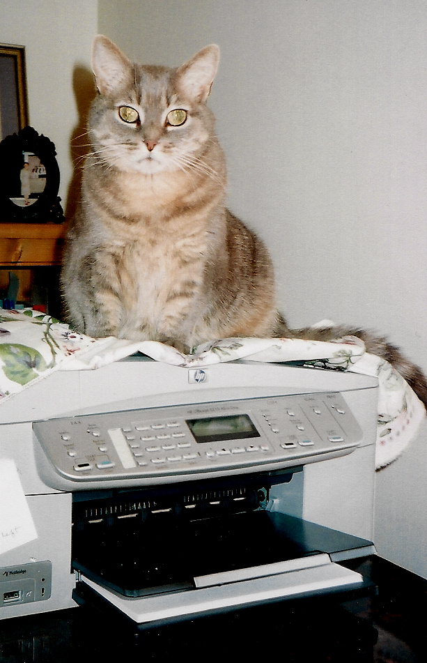 Miss Kitty-my muse for eleven years