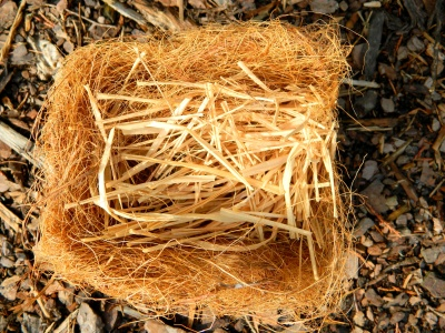 I lined coir nest with raffia strips to prevent nestlings from tangling their nails in coir. From this nest the fledge was successful.