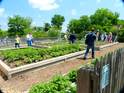 large vegetable gardens at the mansion