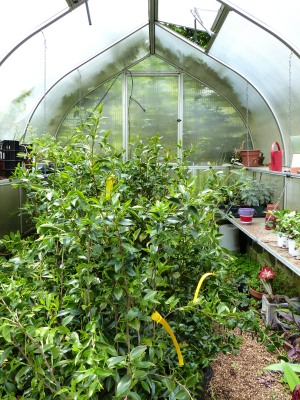 Allen manages a small greenhouse on this property