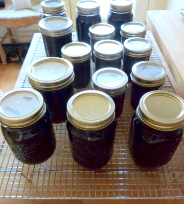 freshly capped jars ready for market
