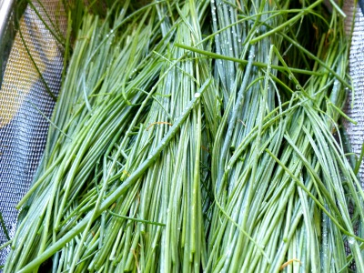 the humble chive herb