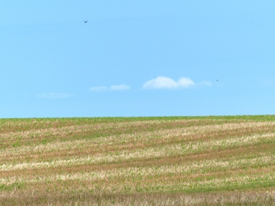 Nearby vista of central Virginia farmland. Notice the speck of gliding hawk in the distance.