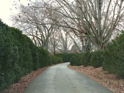 Long boxwood lined drive leading to the early 18th century house Glenmore