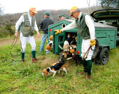 beagles released from their travel buggy