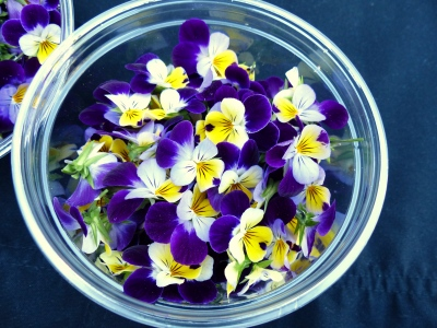 I cannot forget to mention the sweet, edible, most popular plant, the viola or Johnny Jump Up. I am convinced this plant parties at night, as thirteen years ago, seed was planted in the front garden and every year since, I find it growing all over the entire half acre...