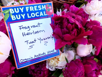 over 400 peony stems went to market last month.