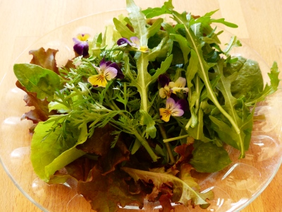 must not forget to show the beautiful salad greens and edible flowers from the garden this week. The arugula was especially nice.