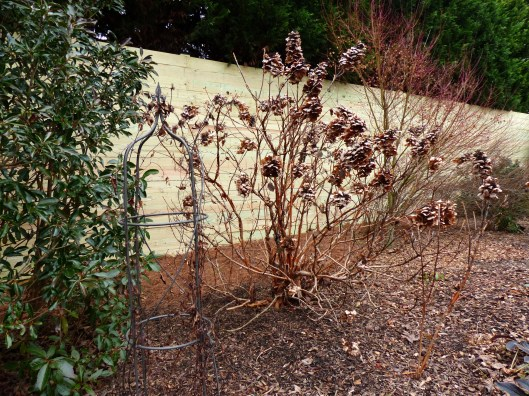 view from the lawn side of the deep shrub border