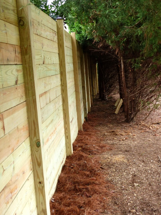 back side of fence with room to return to stain later in the year