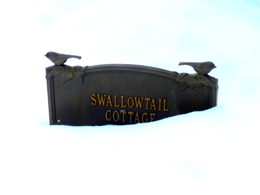 still buried here at Swallowtail Cottage
