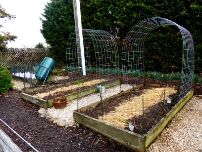 My raised beds groomed for spring/summer crops.  New cattle panels will support snow peas and other climbing edibles
