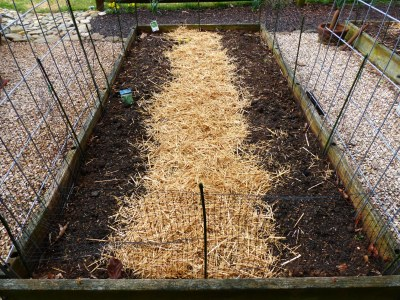 Clean straw creates tidy path between rows