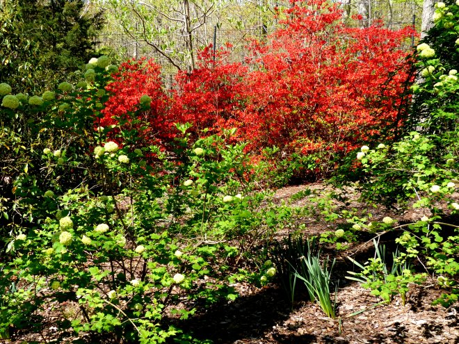 an explosion of color lead me deeper into this     garden