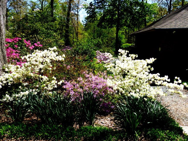 endless profusion of blooms