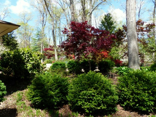 plenty of boxwoods set the stage for triumphant bursts of color