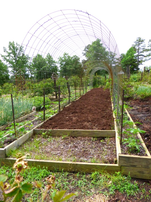 Allen's one-acre veggie garden evolves with bounty and creativity
