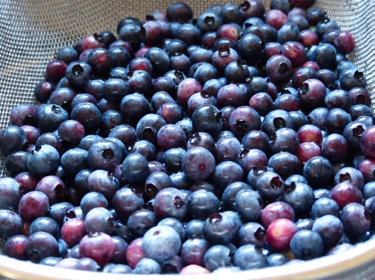 today is a good day for blueberry jam, as the berries just keep coming
