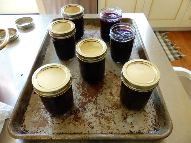using the Rachel Saunders' technique of sterilizing the jars in the oven, the final jam returns to the oven for 15 minutes longer to seal ~ a huge improvement over the boiling kettle process.