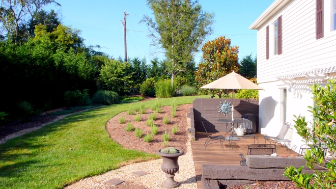 Photo of former failed rosemary bed now containing 14 heirloom peony plants...soon to be mulched with pea gravel...