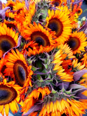 showstopping sunflowers
