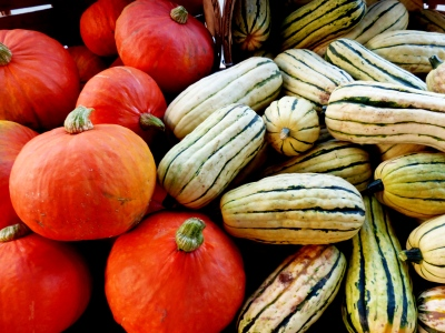 the first Crenshaw squash appears at market