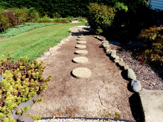 First the mulch was swept away. Then stepping stones were reused from the rear, and set into the dirt.